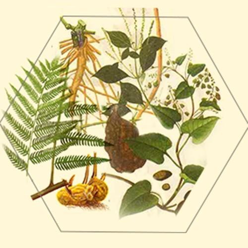 根及根茎类中药