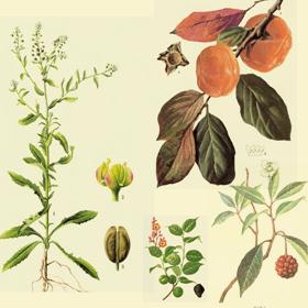 果实种子类中药