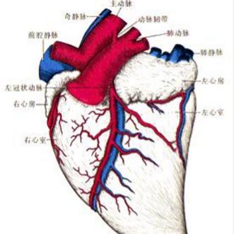 第五章 细胞和组织的损伤